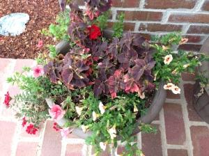 flowersrevived